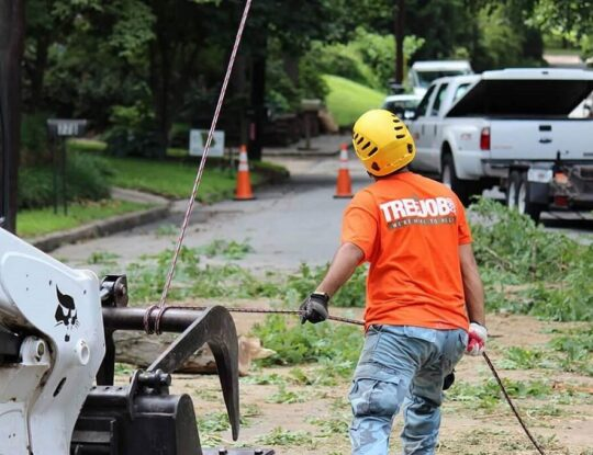 Arborist Consultations-Roanoke Tree Trimming and Stump Grinding Services-We Offer Tree Trimming Services, Tree Removal, Tree Pruning, Tree Cutting, Residential and Commercial Tree Trimming Services, Storm Damage, Emergency Tree Removal, Land Clearing, Tree Companies, Tree Care Service, Stump Grinding, and we're the Best Tree Trimming Company Near You Guaranteed!