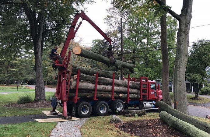 Commercial Tree Services-Roanoke Tree Trimming and Stump Grinding Services-We Offer Tree Trimming Services, Tree Removal, Tree Pruning, Tree Cutting, Residential and Commercial Tree Trimming Services, Storm Damage, Emergency Tree Removal, Land Clearing, Tree Companies, Tree Care Service, Stump Grinding, and we're the Best Tree Trimming Company Near You Guaranteed!