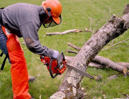 Emergency Tree Removal-Roanoke Tree Trimming and Stump Grinding Services-We Offer Tree Trimming Services, Tree Removal, Tree Pruning, Tree Cutting, Residential and Commercial Tree Trimming Services, Storm Damage, Emergency Tree Removal, Land Clearing, Tree Companies, Tree Care Service, Stump Grinding, and we're the Best Tree Trimming Company Near You Guaranteed!