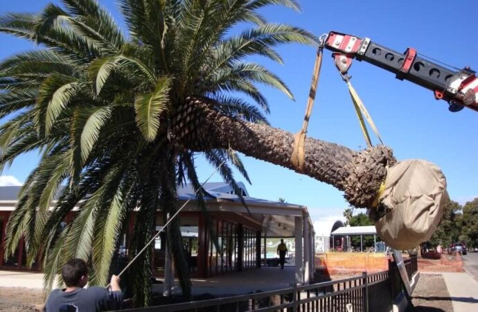 Palm Tree Removal-Roanoke Tree Trimming and Stump Grinding Services-We Offer Tree Trimming Services, Tree Removal, Tree Pruning, Tree Cutting, Residential and Commercial Tree Trimming Services, Storm Damage, Emergency Tree Removal, Land Clearing, Tree Companies, Tree Care Service, Stump Grinding, and we're the Best Tree Trimming Company Near You Guaranteed!