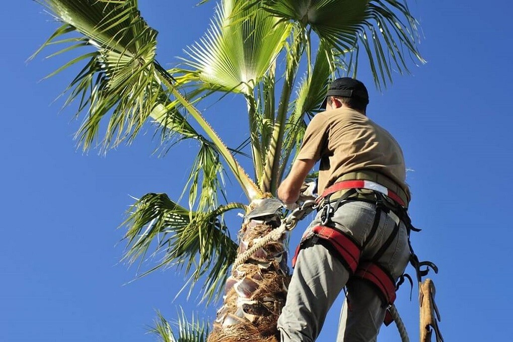 Palm Tree Trimming-Roanoke Tree Trimming and Stump Grinding Services-We Offer Tree Trimming Services, Tree Removal, Tree Pruning, Tree Cutting, Residential and Commercial Tree Trimming Services, Storm Damage, Emergency Tree Removal, Land Clearing, Tree Companies, Tree Care Service, Stump Grinding, and we're the Best Tree Trimming Company Near You Guaranteed!
