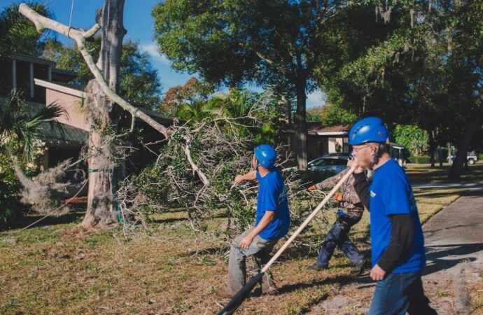 Residential Tree Services-Roanoke Tree Trimming and Stump Grinding Services-We Offer Tree Trimming Services, Tree Removal, Tree Pruning, Tree Cutting, Residential and Commercial Tree Trimming Services, Storm Damage, Emergency Tree Removal, Land Clearing, Tree Companies, Tree Care Service, Stump Grinding, and we're the Best Tree Trimming Company Near You Guaranteed!