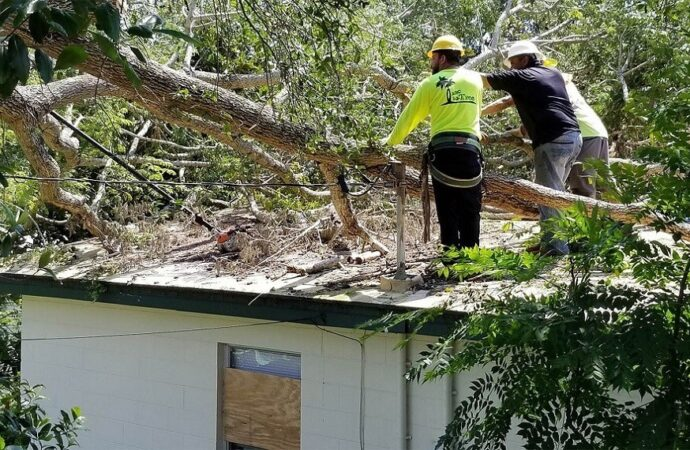 Storm Damage-Roanoke Tree Trimming and Stump Grinding Services-We Offer Tree Trimming Services, Tree Removal, Tree Pruning, Tree Cutting, Residential and Commercial Tree Trimming Services, Storm Damage, Emergency Tree Removal, Land Clearing, Tree Companies, Tree Care Service, Stump Grinding, and we're the Best Tree Trimming Company Near You Guaranteed!
