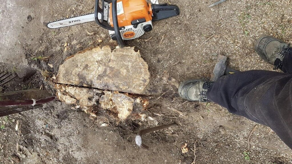 Stump Removal-Roanoke Tree Trimming and Stump Grinding Services-We Offer Tree Trimming Services, Tree Removal, Tree Pruning, Tree Cutting, Residential and Commercial Tree Trimming Services, Storm Damage, Emergency Tree Removal, Land Clearing, Tree Companies, Tree Care Service, Stump Grinding, and we're the Best Tree Trimming Company Near You Guaranteed!