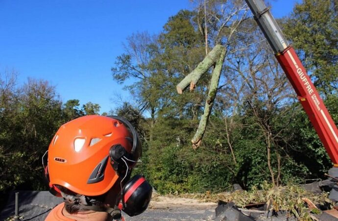 Tree Cutting-Roanoke Tree Trimming and Stump Grinding Services-We Offer Tree Trimming Services, Tree Removal, Tree Pruning, Tree Cutting, Residential and Commercial Tree Trimming Services, Storm Damage, Emergency Tree Removal, Land Clearing, Tree Companies, Tree Care Service, Stump Grinding, and we're the Best Tree Trimming Company Near You Guaranteed!