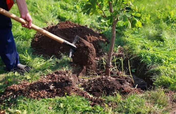 Tree Planting-Roanoke Tree Trimming and Stump Grinding Services-We Offer Tree Trimming Services, Tree Removal, Tree Pruning, Tree Cutting, Residential and Commercial Tree Trimming Services, Storm Damage, Emergency Tree Removal, Land Clearing, Tree Companies, Tree Care Service, Stump Grinding, and we're the Best Tree Trimming Company Near You Guaranteed!