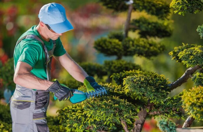 Tree Pruning-Roanoke Tree Trimming and Stump Grinding Services-We Offer Tree Trimming Services, Tree Removal, Tree Pruning, Tree Cutting, Residential and Commercial Tree Trimming Services, Storm Damage, Emergency Tree Removal, Land Clearing, Tree Companies, Tree Care Service, Stump Grinding, and we're the Best Tree Trimming Company Near You Guaranteed!