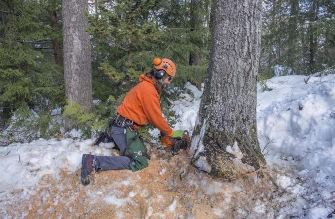 Tree Removal-Roanoke Tree Trimming and Stump Grinding Services-We Offer Tree Trimming Services, Tree Removal, Tree Pruning, Tree Cutting, Residential and Commercial Tree Trimming Services, Storm Damage, Emergency Tree Removal, Land Clearing, Tree Companies, Tree Care Service, Stump Grinding, and we're the Best Tree Trimming Company Near You Guaranteed!