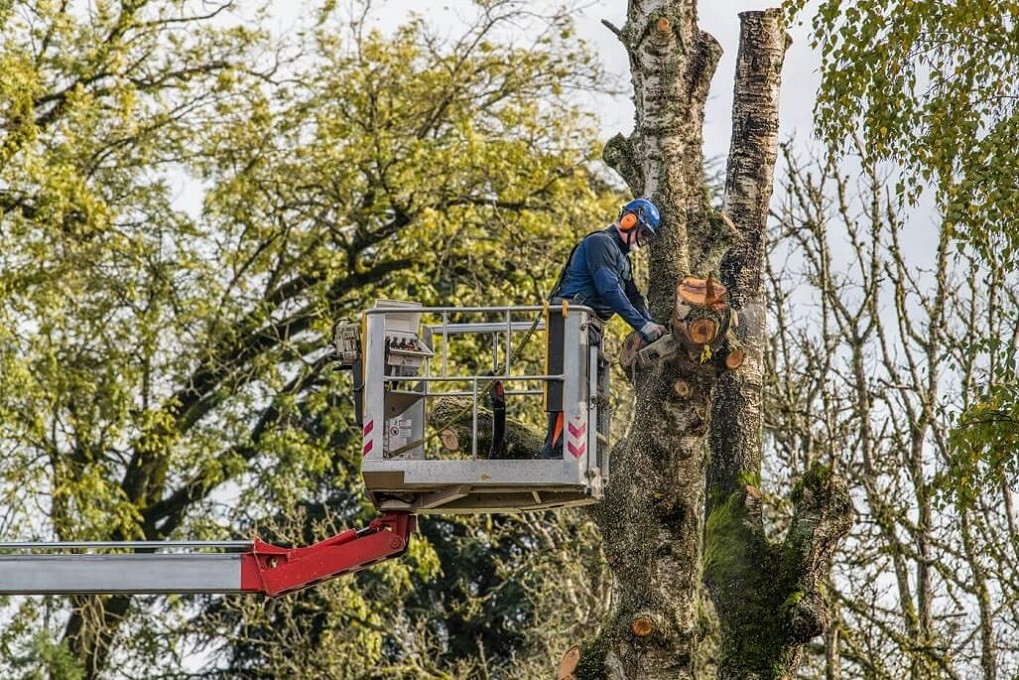 Tree Trimming-Roanoke Tree Trimming and Stump Grinding Services-We Offer Tree Trimming Services, Tree Removal, Tree Pruning, Tree Cutting, Residential and Commercial Tree Trimming Services, Storm Damage, Emergency Tree Removal, Land Clearing, Tree Companies, Tree Care Service, Stump Grinding, and we're the Best Tree Trimming Company Near You Guaranteed!