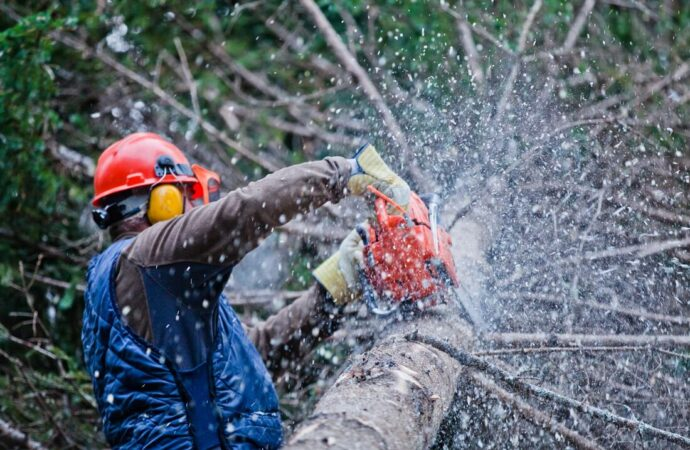 Bonsack-Roanoke Tree Trimming and Stump Grinding Services-We Offer Tree Trimming Services, Tree Removal, Tree Pruning, Tree Cutting, Residential and Commercial Tree Trimming Services, Storm Damage, Emergency Tree Removal, Land Clearing, Tree Companies, Tree Care Service, Stump Grinding, and we're the Best Tree Trimming Company Near You Guaranteed!