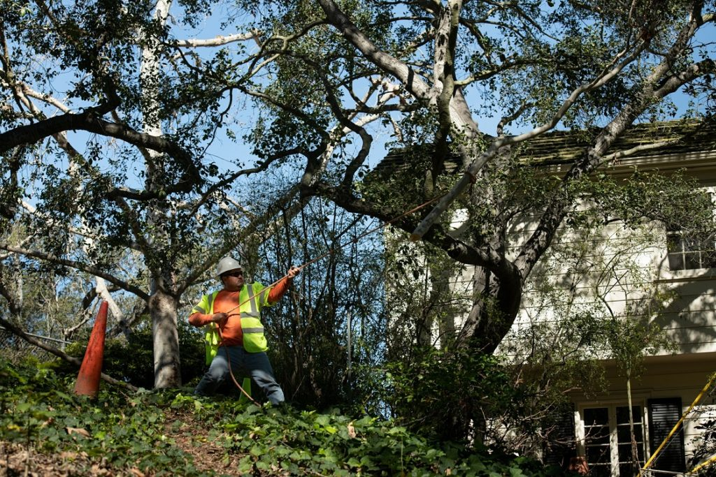 Roanoke, Virginia-Roanoke Tree Trimming and Stump Grinding Services-We Offer Tree Trimming Services, Tree Removal, Tree Pruning, Tree Cutting, Residential and Commercial Tree Trimming Services, Storm Damage, Emergency Tree Removal, Land Clearing, Tree Companies, Tree Care Service, Stump Grinding, and we're the Best Tree Trimming Company Near You Guaranteed!