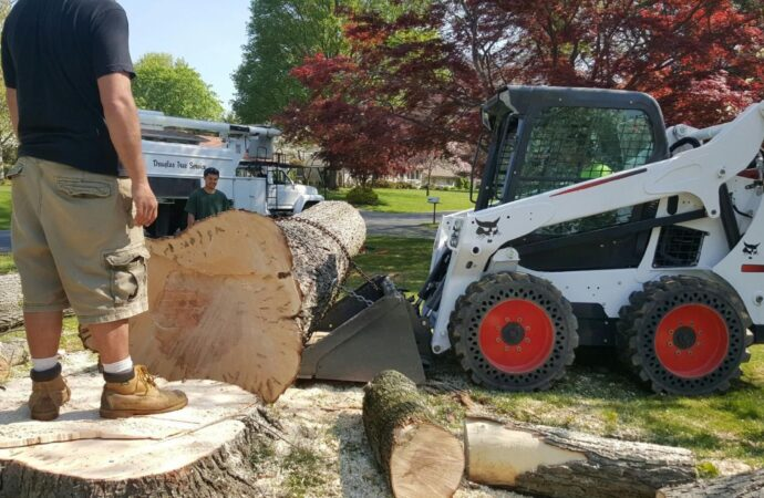 Salem-Roanoke Tree Trimming and Stump Grinding Services-We Offer Tree Trimming Services, Tree Removal, Tree Pruning, Tree Cutting, Residential and Commercial Tree Trimming Services, Storm Damage, Emergency Tree Removal, Land Clearing, Tree Companies, Tree Care Service, Stump Grinding, and we're the Best Tree Trimming Company Near You Guaranteed!